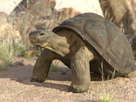 School project : Giant Turtle