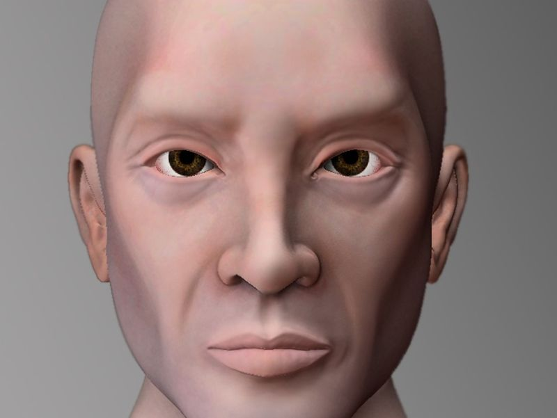 Human Male Bust