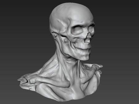 WIP: Practice sculpt
