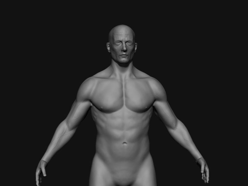 Anatomy study (male)