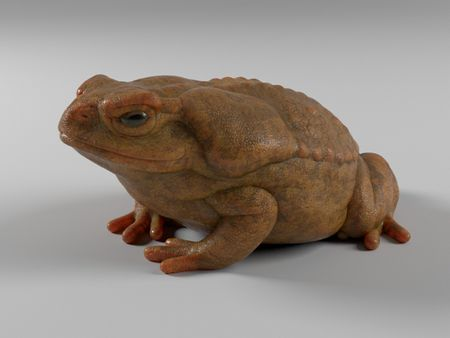 Frog Look Dev and Texture