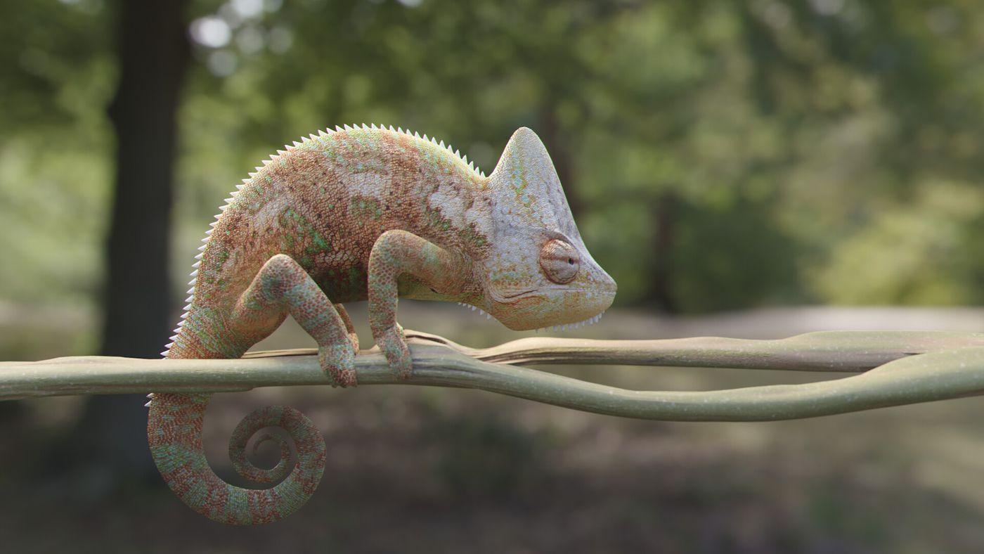 Chamaeleonidae
