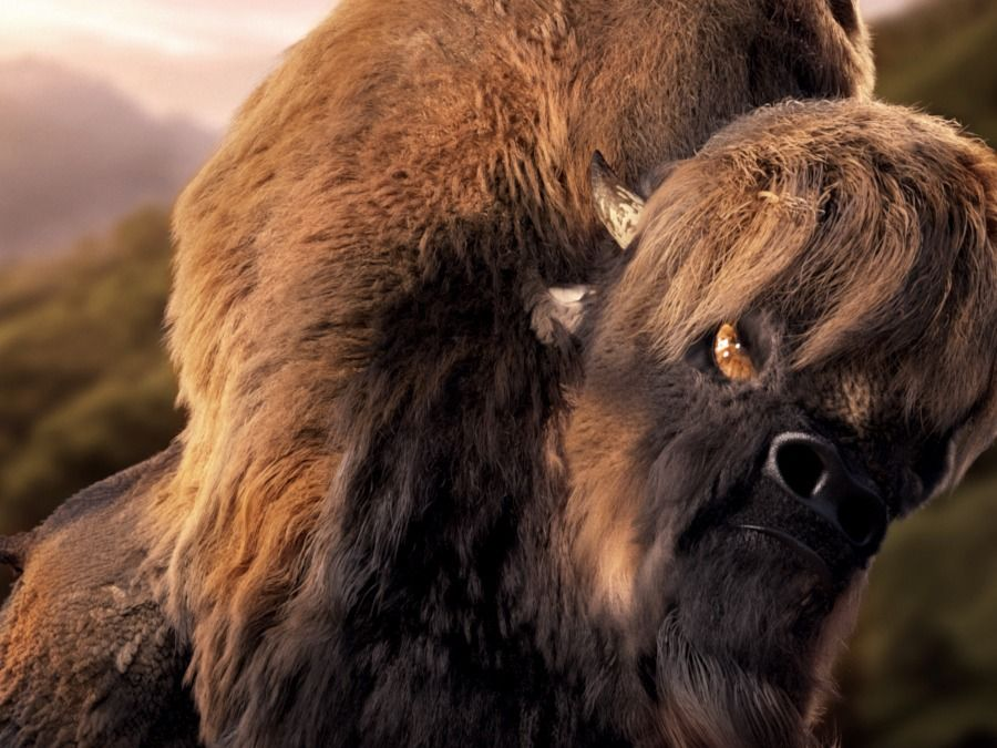 Characterised Bison ( Fur Project)