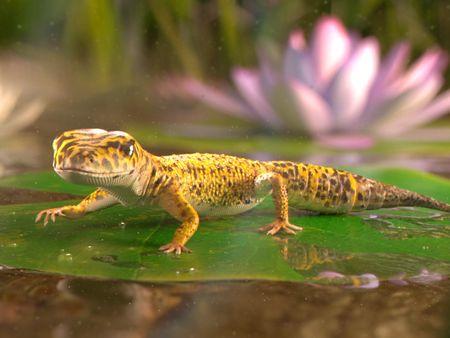 The little gekko