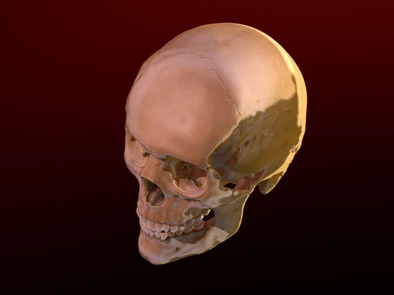 Woman's Skull