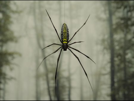 Banana Spider (Insect World Contest)