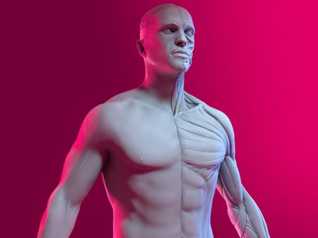 Anatomy Study - Animum Creativity Advanced School