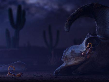 Scorpions in the desert