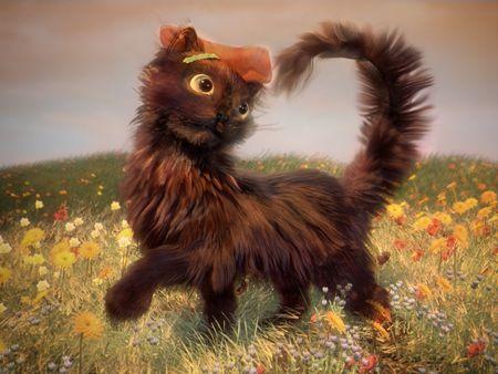 Mia the explorer kitten
