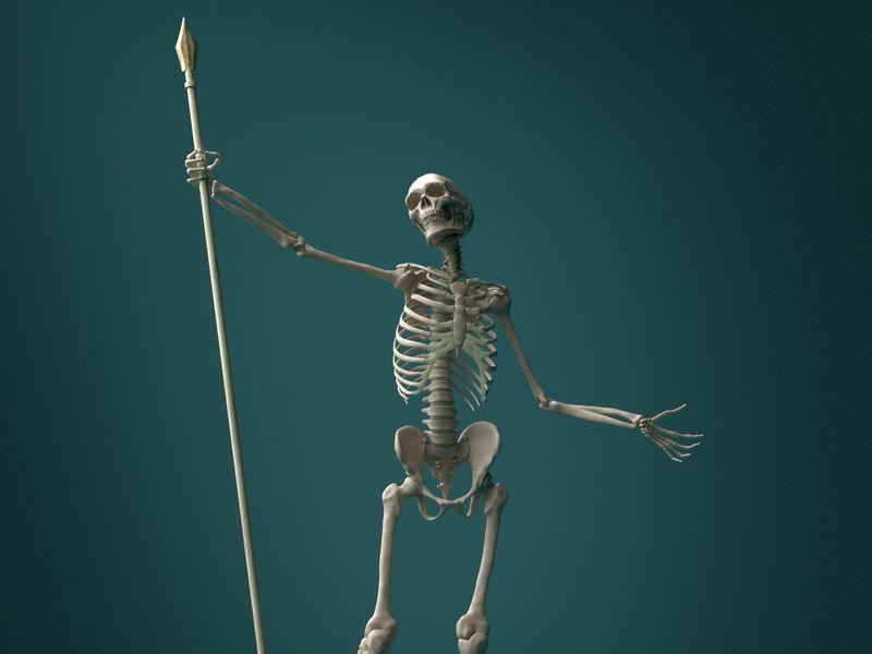 Human Skeletal Anatomy Study