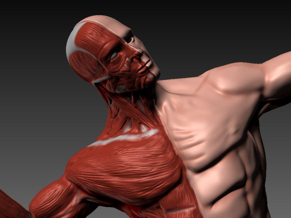 Fundamentals: Anatomy