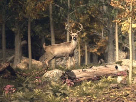 shortfilm: the hunt