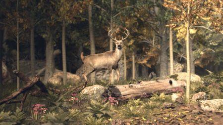 Shortfilm the hunt