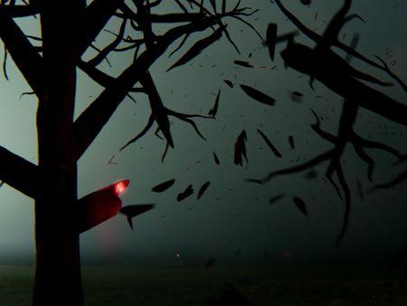 Lighning Strikes Tree