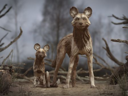 """Painted Wolves """"enigmatic creatures"""""""