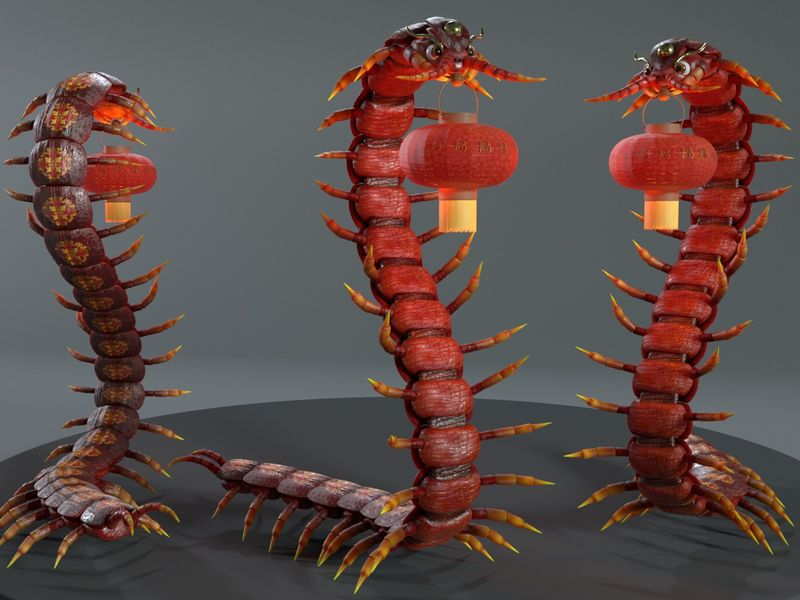 Chinese Dragon Centipede