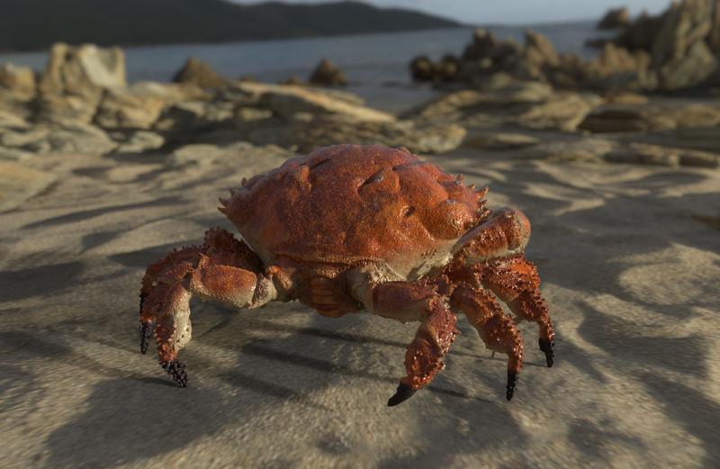 Crab texture