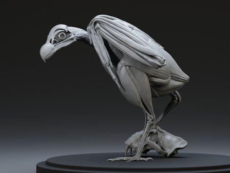 Vulture Écorché