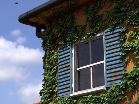 Italian Ivy House