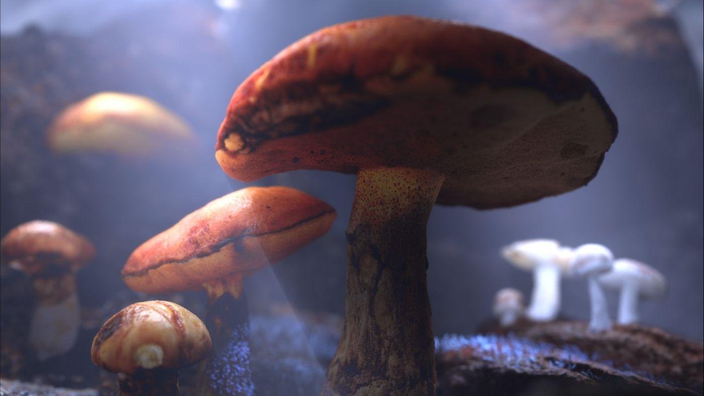 Mushroomscropped Juriaanw