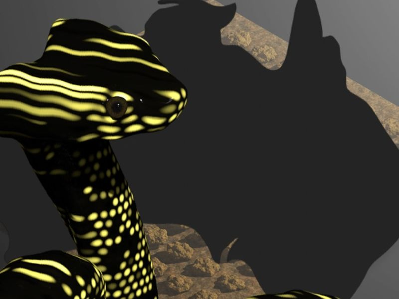 Australian Bushfire Recovery: Broad-Headed Snake