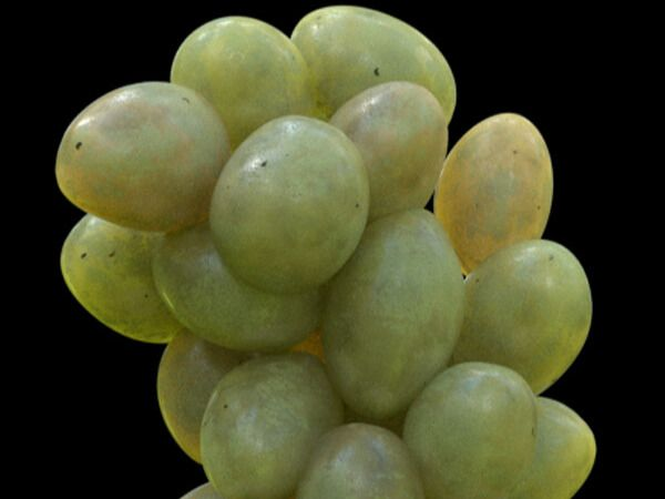 CG Grapes