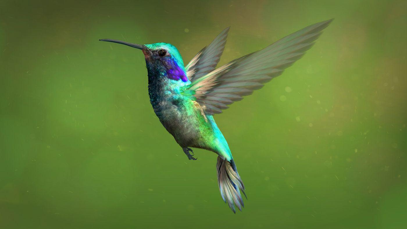 Hummingbird 2 Kriskamikakushi