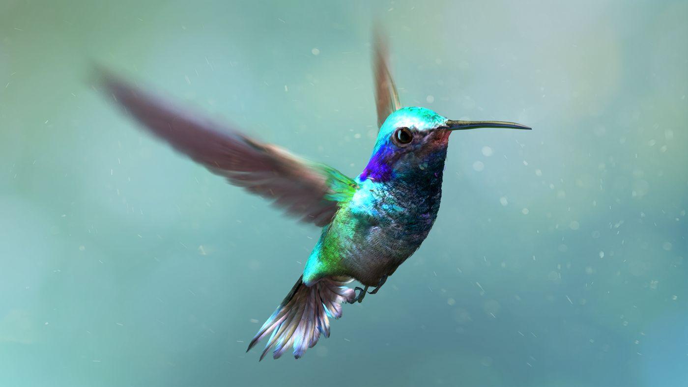 Hummingbird 3 Kriskamikakushi