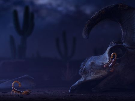 Scorpion Desert