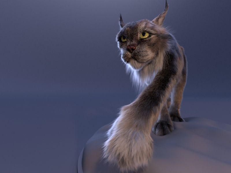 Canadensis Lynx