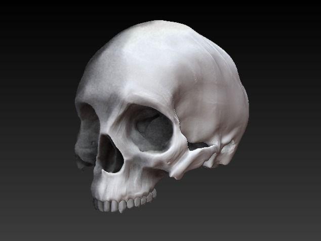 Skull sculpt anatomy study