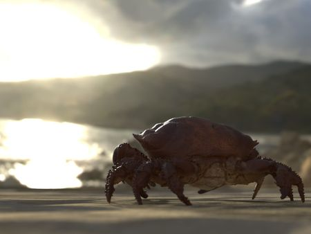 Texture Study on a Crab Scan