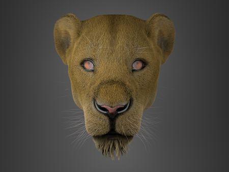 Lion Groom