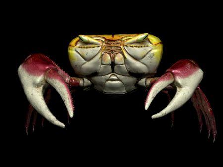 Uça Crab