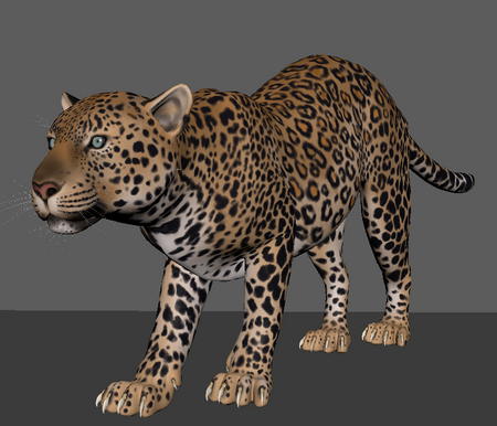 Leopard cycle study