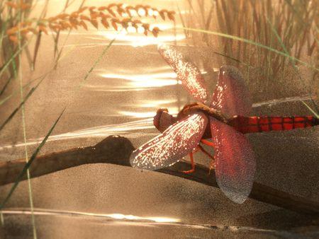 Neurothemis Terminata - Dragonfly modeling