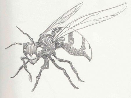 Insects studies