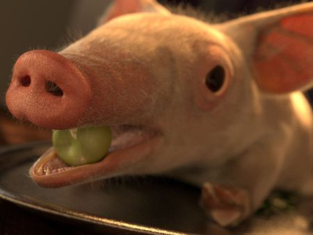 Dinner Pig
