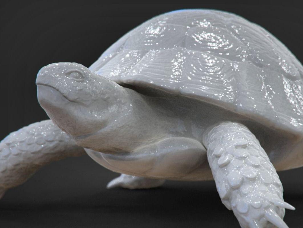 Tortuga - Hermann's Tortoise Sculpt