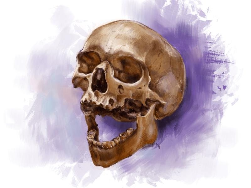 Weekly Drill 25 - Human Skull