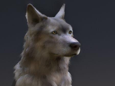 Hybrid wolf Aragon