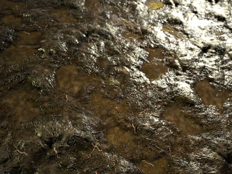 Mud with Worms | Substance Designer