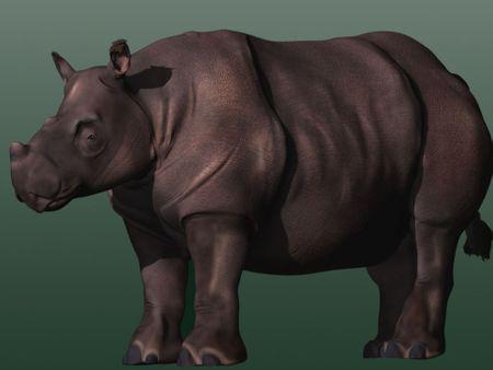 Sumatran Rhino: IMS 215