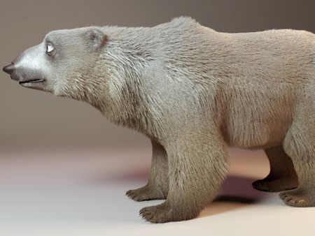 Bear with Fur