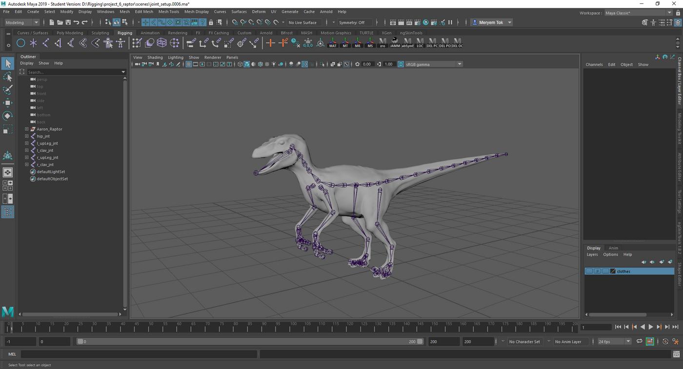 Raptor Skeleton Merytok