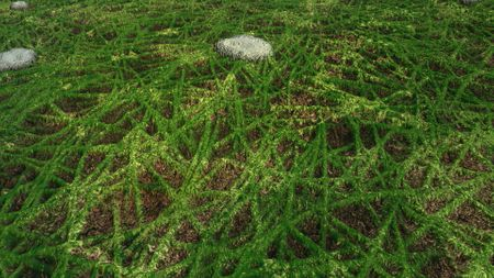 Grass and Rocks