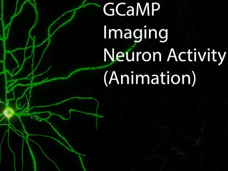 GCaMP Calcium Imaging of Neurons