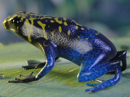 Dart Frog Scene