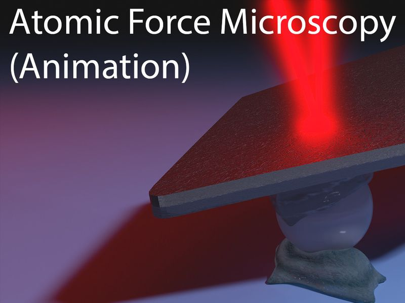 Atomic Force Microscopy of Live Cells