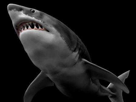 Low Poly Great White Shark
